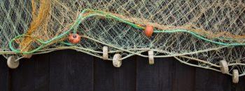 Pescado y marisco congelado españa también vive del mar