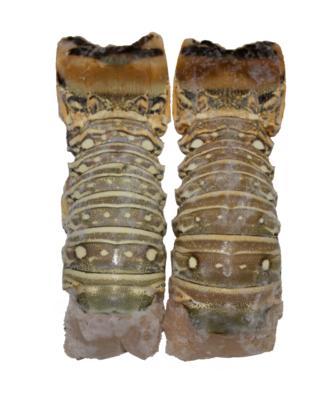 colas de langosta