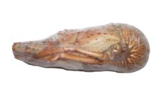 langosta cocida
