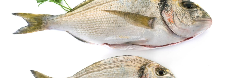 Pescados de la A a la Z: La dorada - Pescado y marisco congelado