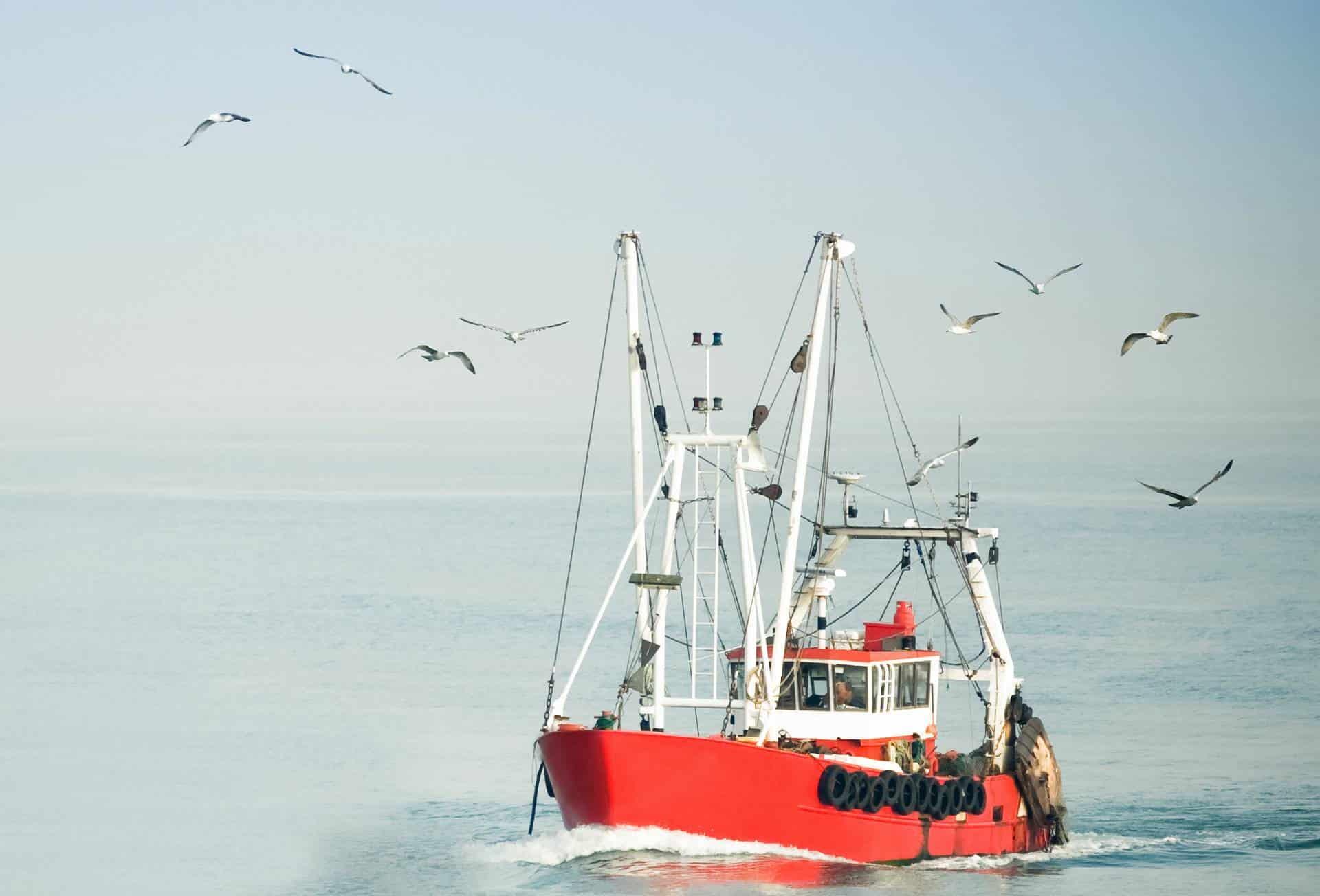 Importamos productos del mar congelados