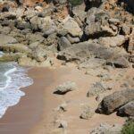 Pescados y mariscos de la A a la Z: La Acedía - Pescado de Andalucía