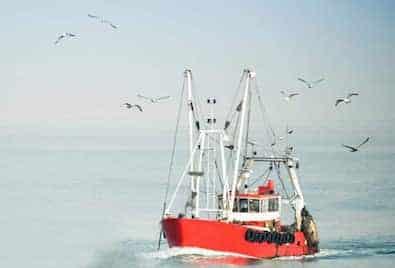 Barco Importamos Productos Mar Apolo